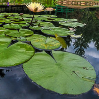 Gibbs Gardens Photography Exhibit and Waterlily Festival